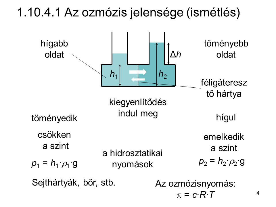 1.10.4.1 Az ozmózis jelensége (ismétlés) hígabb oldat töményebb oldat töményedik hígul csökken a szint emelkedik a szint kiegyenlítődés indul meg ΔhΔh h2h2 h1h1 p 1 = h 1 ·  1 ·g p 2 = h 2 ·  2 ·g féligáteresz tő hártya Az ozmózisnyomás:  = c·R·T a hidrosztatikai nyomások Sejthártyák, bőr, stb.
