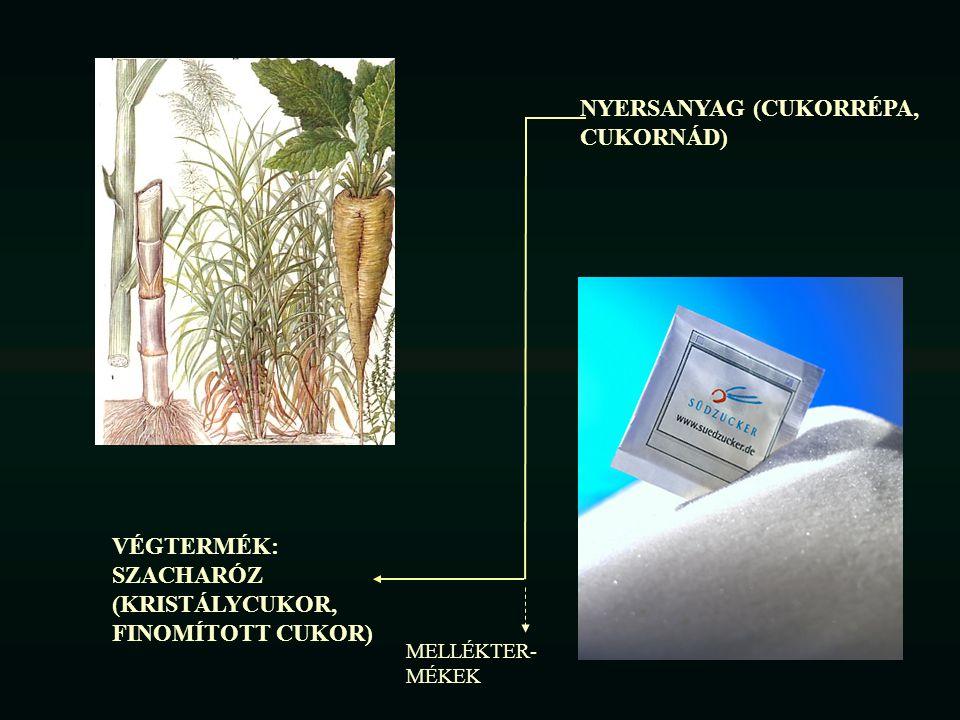 Előlészítés extrakcióra Parenchima szövet sejtjei (200-400 µm) Vakuolum Membrán (szemipermeábilis) Citoplazma Köztes lamella Sejtközötti járat Sejtfal Szeletelés: sejtek 5-10%- a sérül, a cukor hozzáférhetővé válik Parenchima szövetbe beágyazott edénnyalábok: Floem (háncs sejtek) Xylem (fa sejtek: cellulózban, ligninben gazdag)) Megnehezíti a répa szeletelést Répaszelet (édes szelet) továbbítása extrakcióra Vakuolumok membránjainak permeábilissá tétele hőkezeléssel: vakuolumokból a szacharóz az extrakciós közegbe átmegy.
