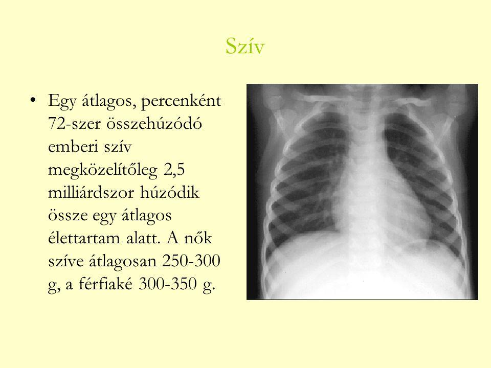 Szív Egy átlagos, percenként 72-szer összehúzódó emberi szív megközelítőleg 2,5 milliárdszor húzódik össze egy átlagos élettartam alatt. A nők szíve á