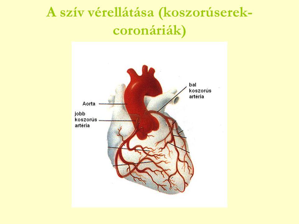 A szív vérellátása (koszorúserek- coronáriák)
