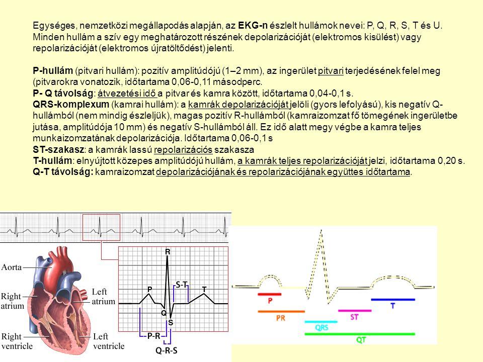 Egységes, nemzetközi megállapodás alapján, az EKG-n észlelt hullámok nevei: P, Q, R, S, T és U. Minden hullám a szív egy meghatározott részének depola