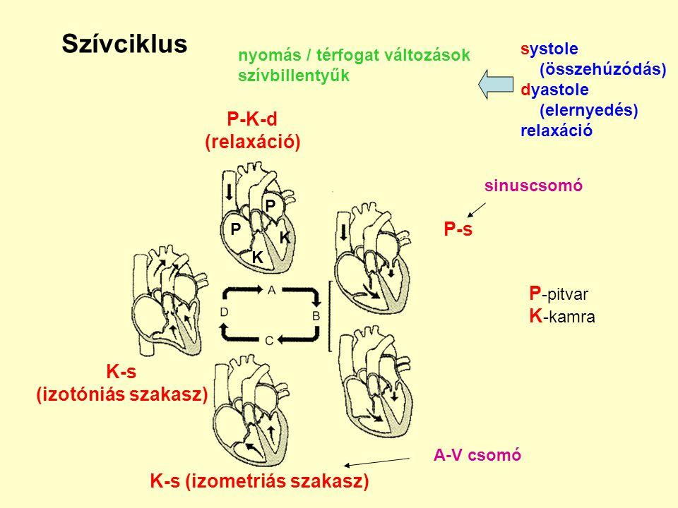 Szívciklus nyomás / térfogat változások szívbillentyűk systole (összehúzódás) dyastole (elernyedés) relaxáció P-K-d (relaxáció) P-s K-s (izometriás sz