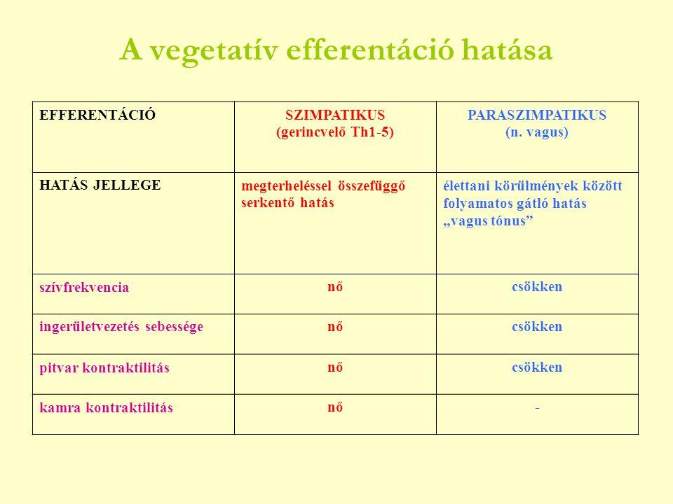 A vegetatív efferentáció hatása EFFERENTÁCIÓSZIMPATIKUS (gerincvelő Th1-5) PARASZIMPATIKUS (n. vagus) HATÁS JELLEGEmegterheléssel összefüggő serkentő