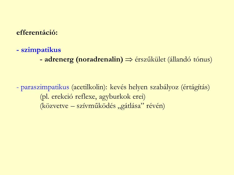 efferentáció: - szimpatikus - adrenerg (noradrenalin)  érszűkület (állandó tónus) - paraszimpatikus (acetilkolin): kevés helyen szabályoz (értágítás)