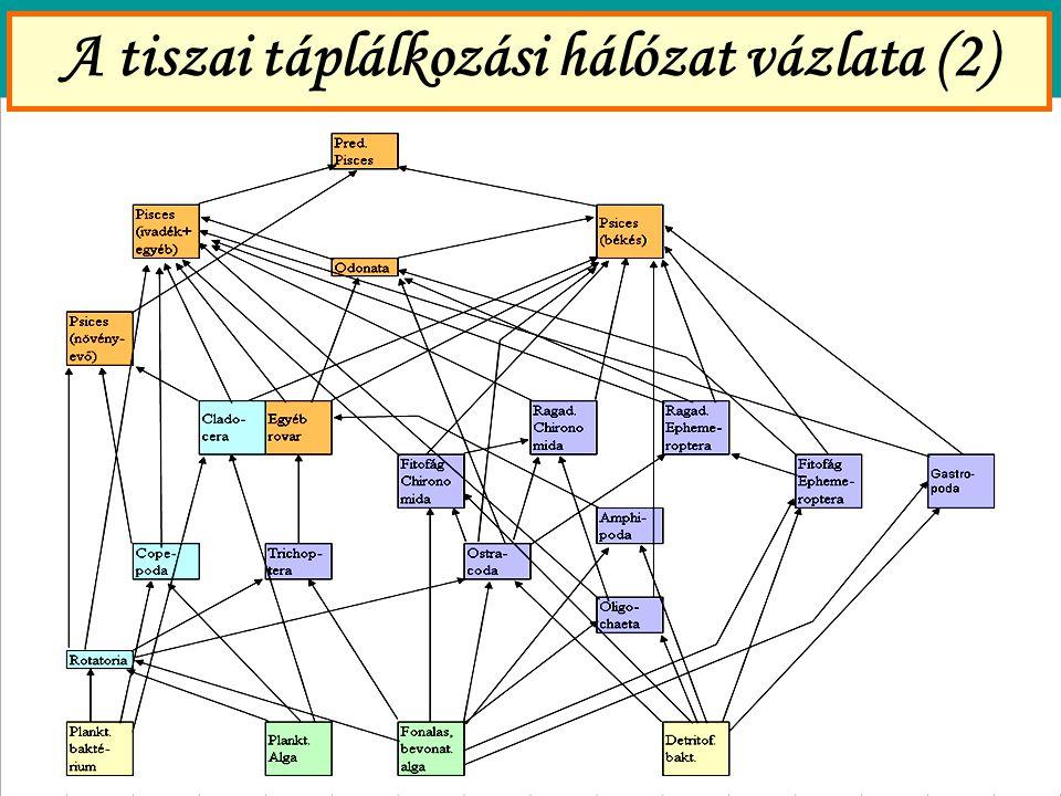 A tiszai táplálkozási hálózat vázlata (2)