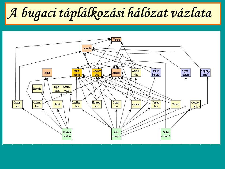 A bugaci táplálkozási hálózat vázlata