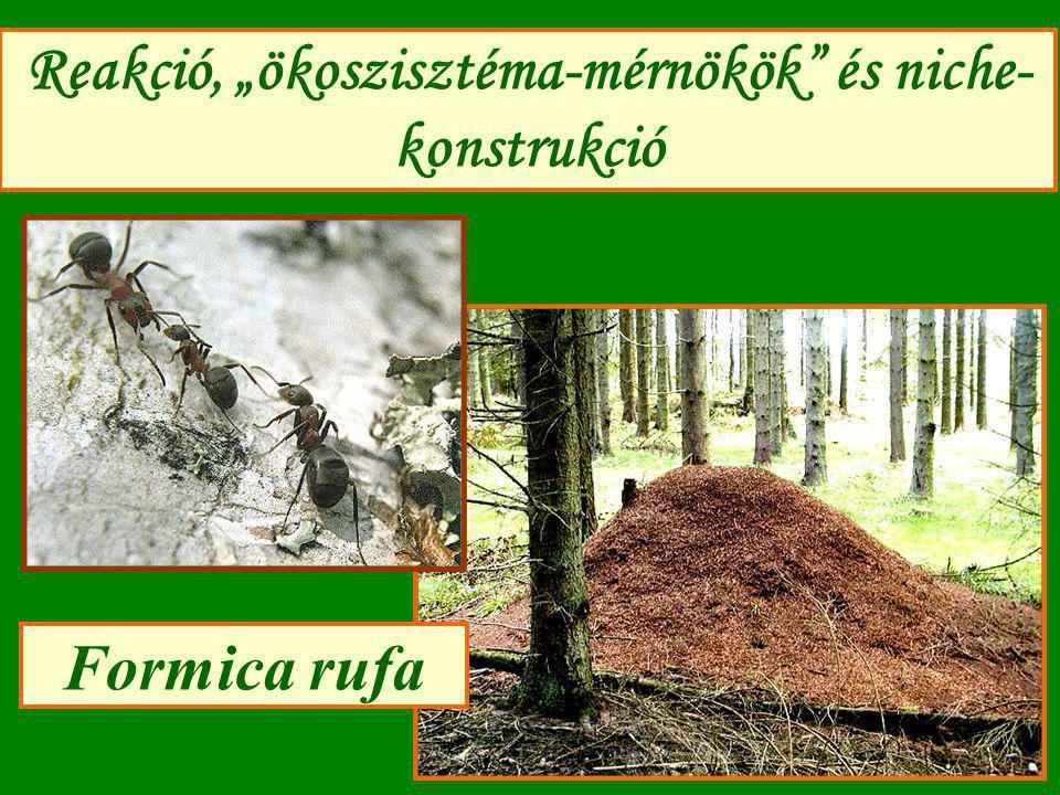 Ökoszisztéma-mérnökség modellje (4): Szimuláció eredménye (1) N<H (N*<K) (2) Stabilitás függ: b, r max