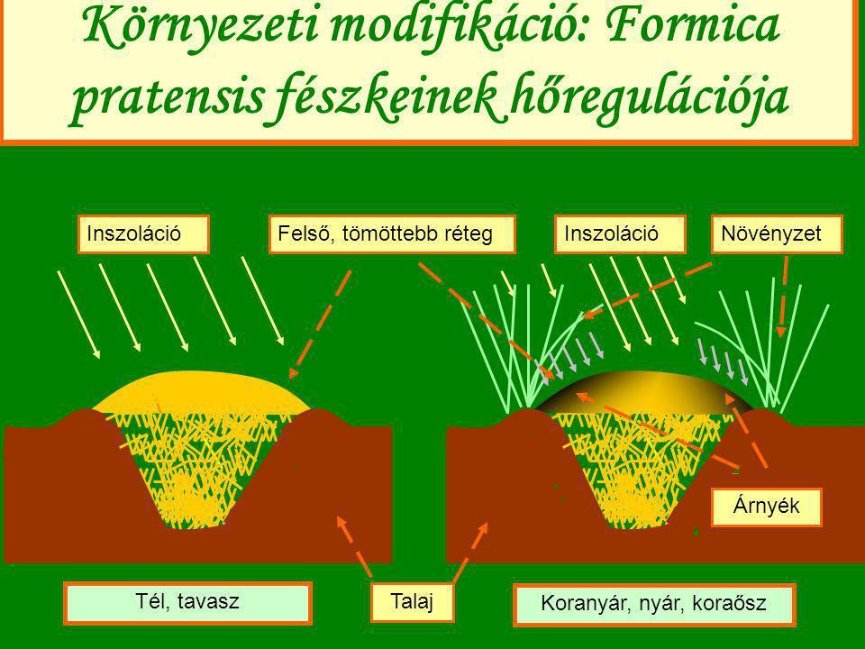 A fészkek hőregulációjának módja (1) Inszoláció felhasználása (a laza fészekanyag hő-felvétele igen jó) (2) A környékhez képest jó talajviszonyok miatt felnövő magas növényzet árnyékolásának felhasználása (3) A fészek felületén összegyűlő dolgozók tavasszal saját, felmelegített testükkel fűtik a fészket (4) Intenzív respiráció (hangyáké + vendégeké) (5) A nagyobb fészkek hőregulációja még jobb.