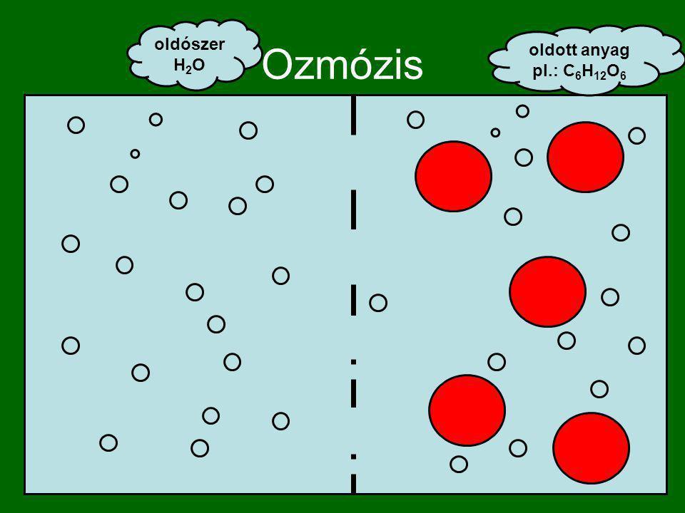 Ozmózis oldószer H 2 O oldott anyag pl.: C 6 H 12 O 6