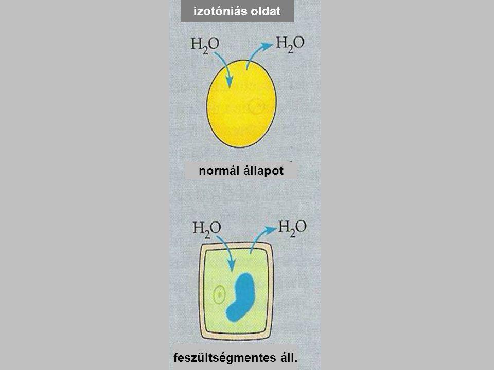 izotóniás oldat feszültségmentes áll.