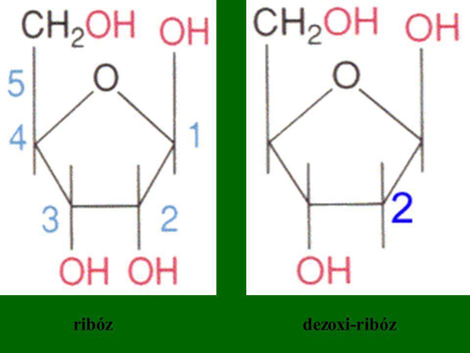 ribózdezoxi-ribóz