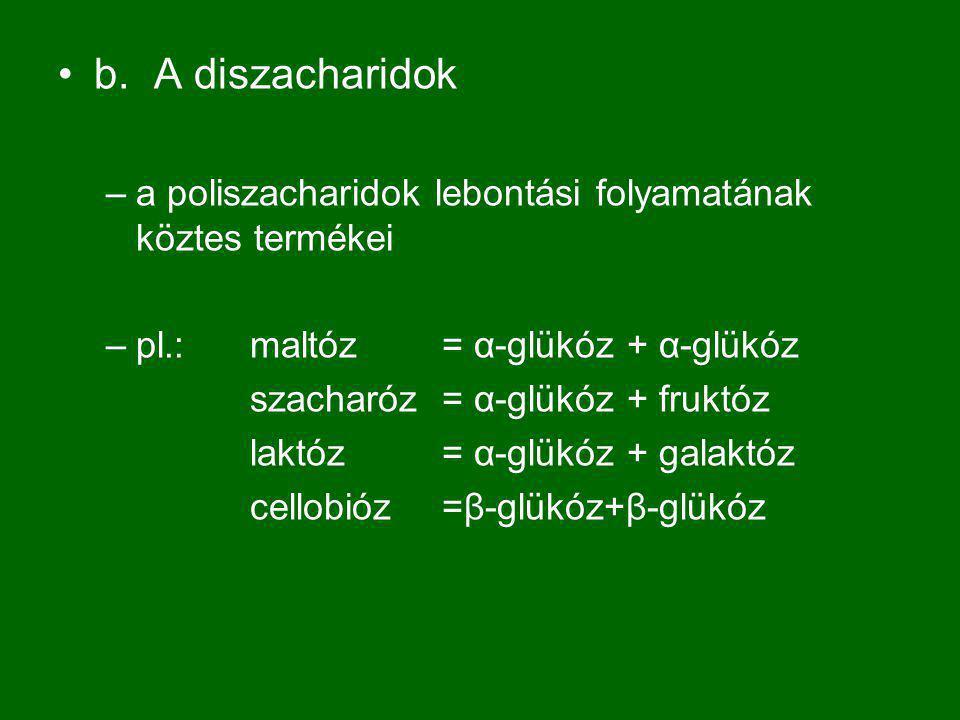 b.A diszacharidok –a poliszacharidok lebontási folyamatának köztes termékei –pl.: maltóz = α-glükóz + α-glükóz szacharóz= α-glükóz + fruktóz laktóz= α-glükóz + galaktóz cellobióz=β-glükóz+β-glükóz