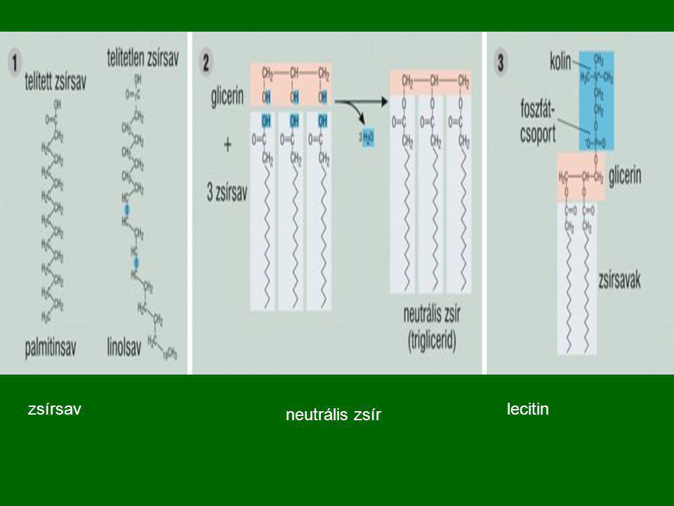 lecitinzsírsav neutrális zsír