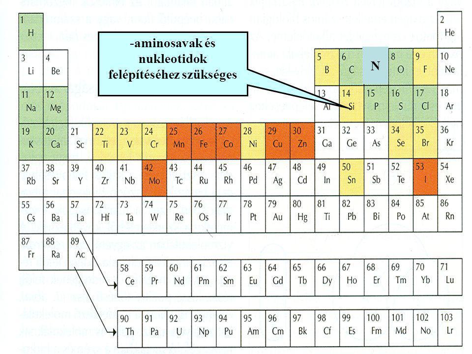 N -aminosavak és nukleotidok felépítéséhez szükséges