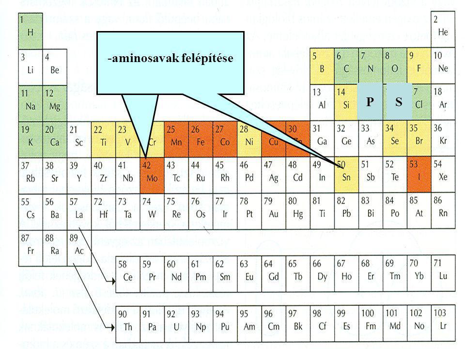 P -foszfatidok felépítése S -aminosavak felépítése