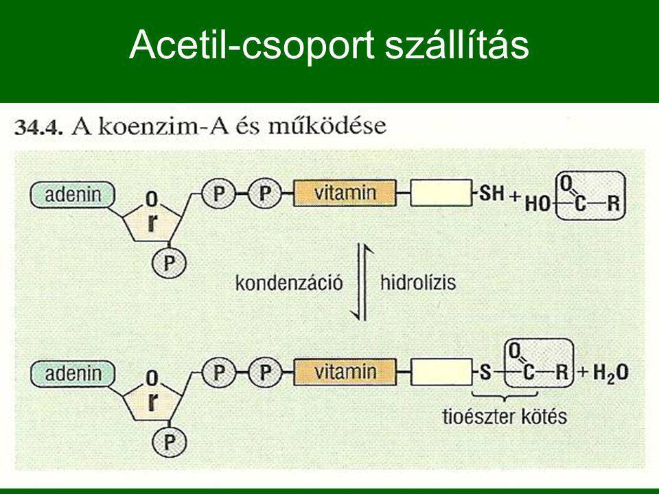 Acetil-csoport szállítás