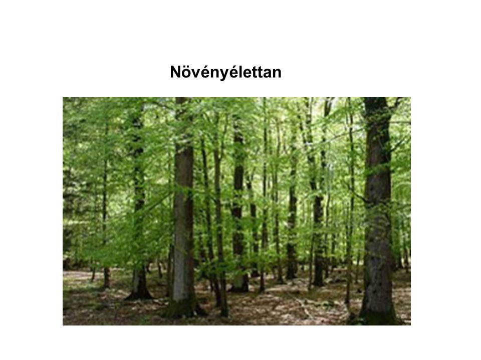 A fotoszintézis részfolyamatai FÉNYSZAKASZ: fényenergia megkötése és kémiai E-vá alakítása SÖTÉTSZAKASZ: CO 2 megkötése és redukálása FÉNYSZAKASZ SÖTÉTSZAKASZ ATPNADPH FÉNY CO 2 ADP NADP + C 6 H 12 O 6 H2OH2OO2O2