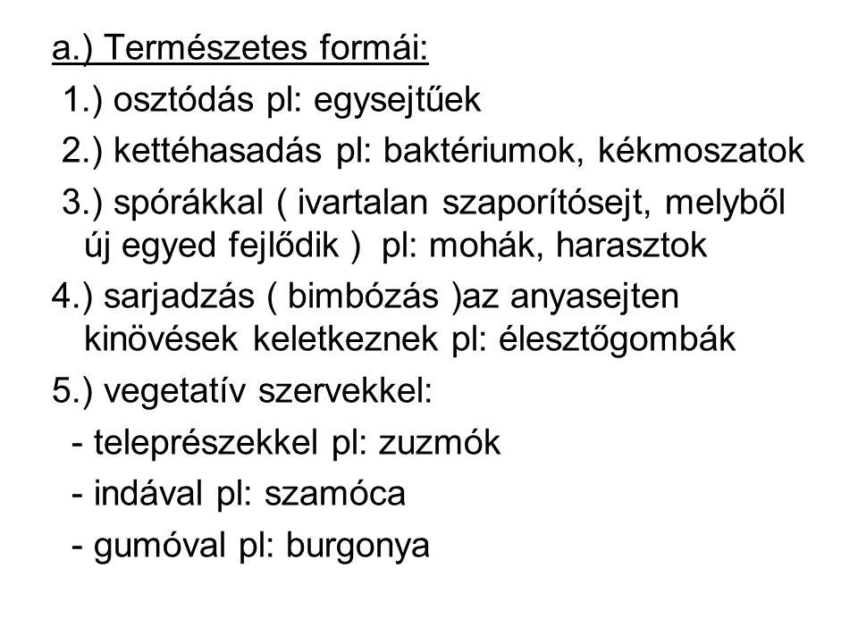 a.) Természetes formái: 1.) osztódás pl: egysejtűek 2.) kettéhasadás pl: baktériumok, kékmoszatok 3.) spórákkal ( ivartalan szaporítósejt, melyből új egyed fejlődik ) pl: mohák, harasztok 4.) sarjadzás ( bimbózás )az anyasejten kinövések keletkeznek pl: élesztőgombák 5.) vegetatív szervekkel: - teleprészekkel pl: zuzmók - indával pl: szamóca - gumóval pl: burgonya