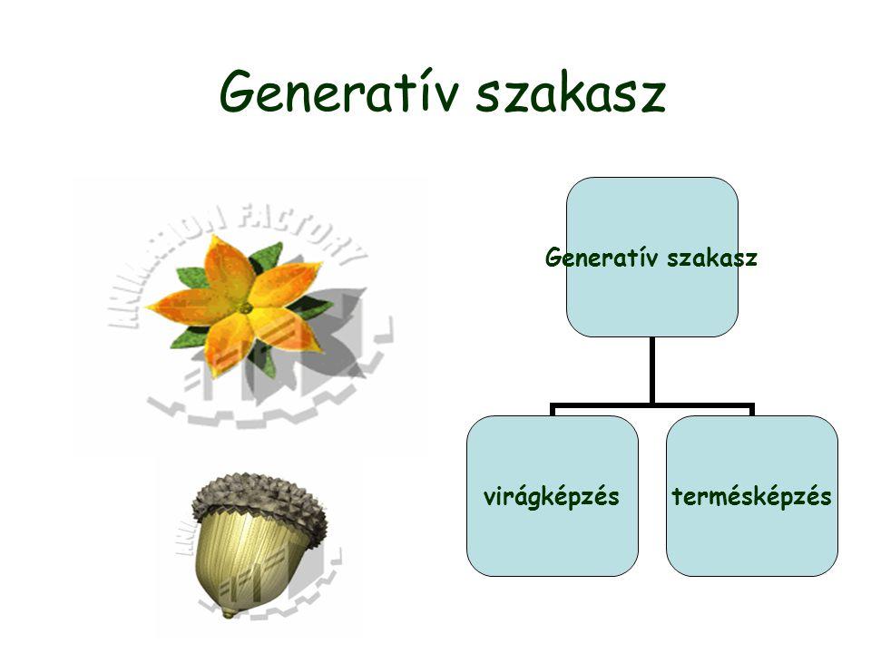Generatív szakasz virágképzéstermésképzés