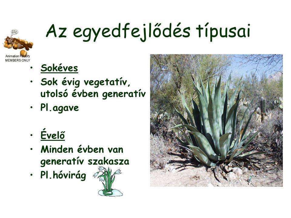 Az egyedfejlődés típusai Sokéves Sok évig vegetatív, utolsó évben generatív Pl.agave Évelő Minden évben van generatív szakasza Pl.hóvirág