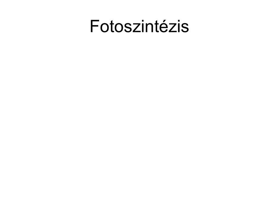 Fotoszintézis