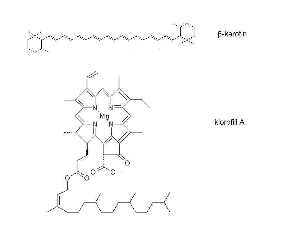 β-karotin klorofill A