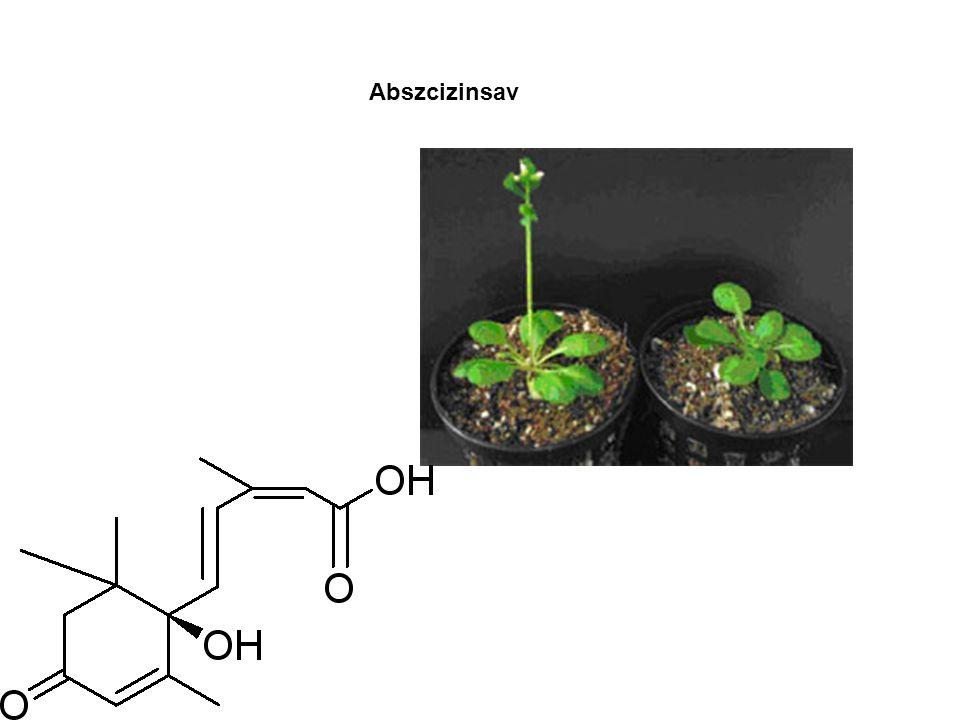 A növények szaporodása Az ivaros és ivartalan szaporodás összehasonlítása és típusai