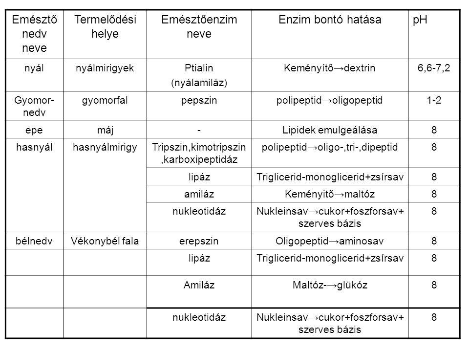 Emésztő nedv neve Termelődési helye Emésztőenzim neve Enzim bontó hatásapH nyálnyálmirigyekPtialin (nyálamiláz) Keményítő→dextrin6,6-7,2 Gyomor- nedv