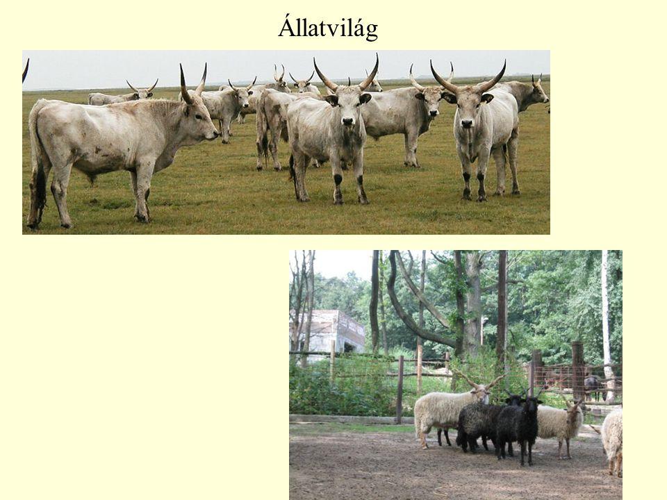 16 Állatvilág