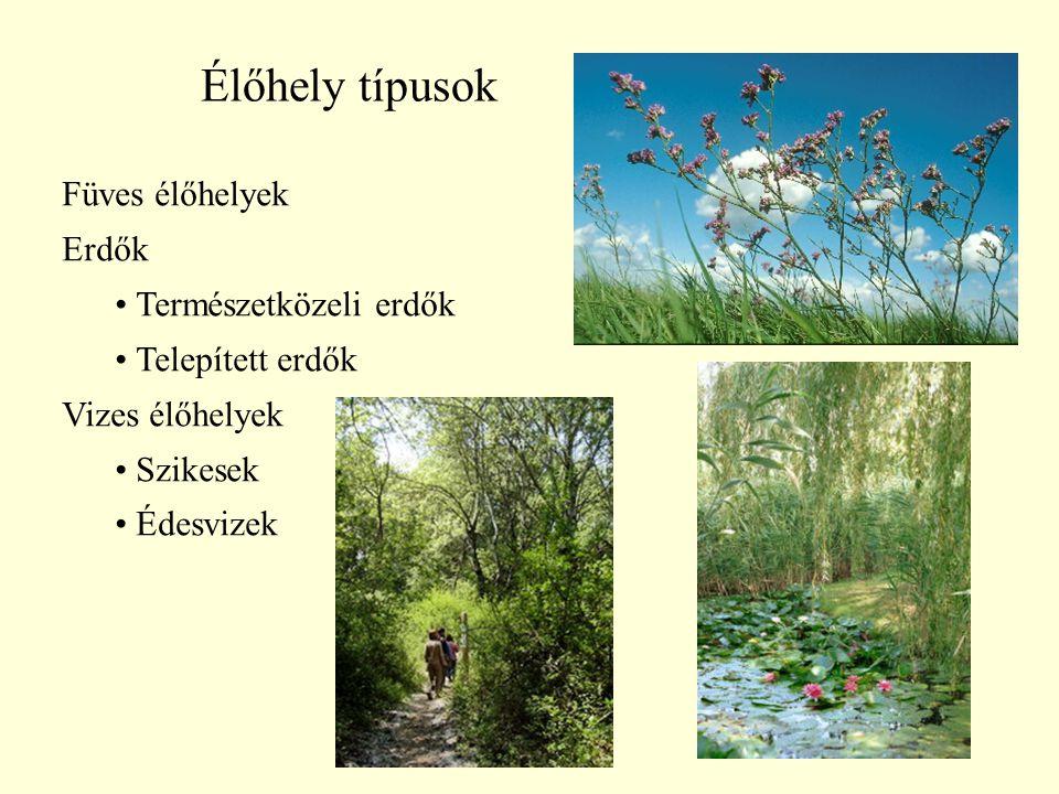 30 Élőhely típusok Füves élőhelyek Erdők Természetközeli erdők Telepített erdők Vizes élőhelyek Szikesek Édesvizek