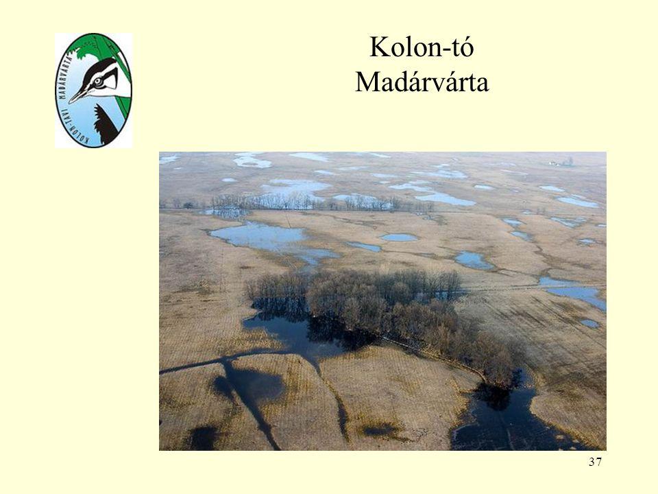 37 Kolon-tó Madárvárta