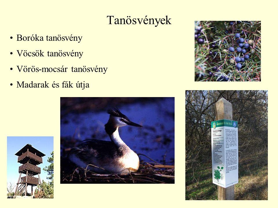 38 Tanösvények Boróka tanösvény Vöcsök tanösvény Vörös-mocsár tanösvény Madarak és fák útja