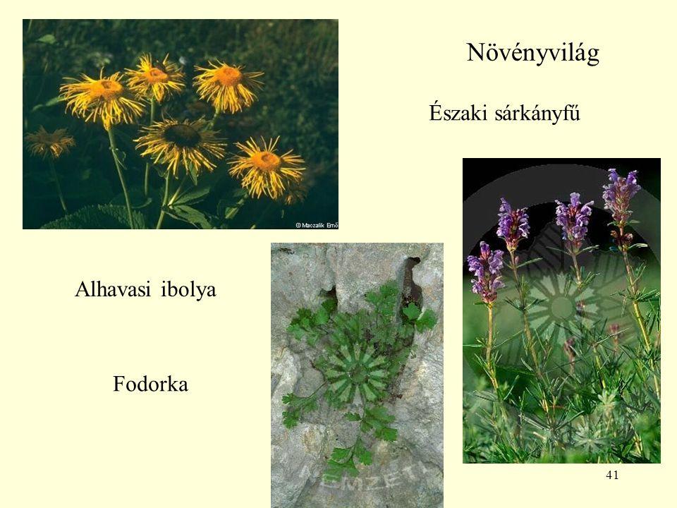 41 Növényvilág Alhavasi ibolya Északi sárkányfű Fodorka
