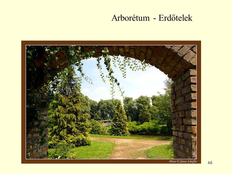 46 Arborétum - Erdőtelek