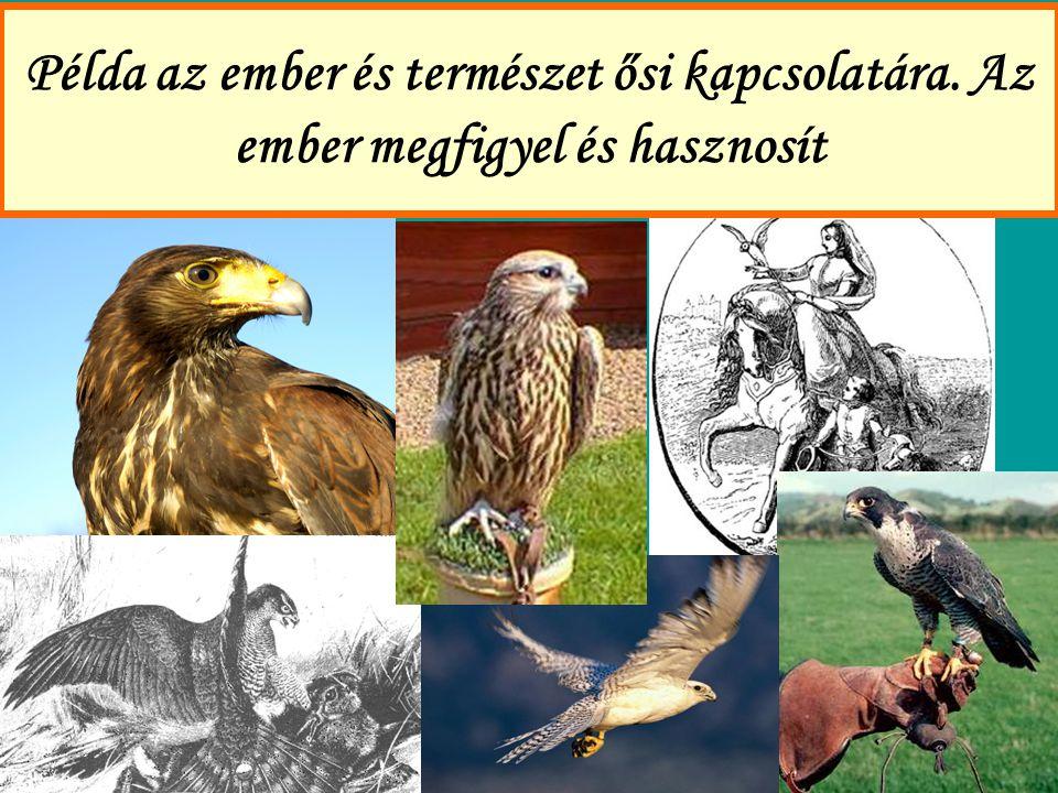 Egy további példa az ember és természet ősi kapcsolatára: a szövőhangyák és az ember