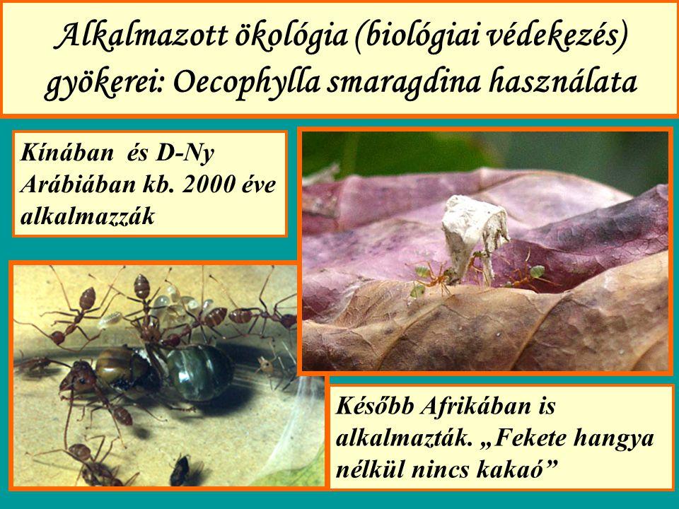 Alkalmazott ökológia (biológiai védekezés) gyökerei: Oecophylla smaragdina használata Kínában és D-Ny Arábiában kb.
