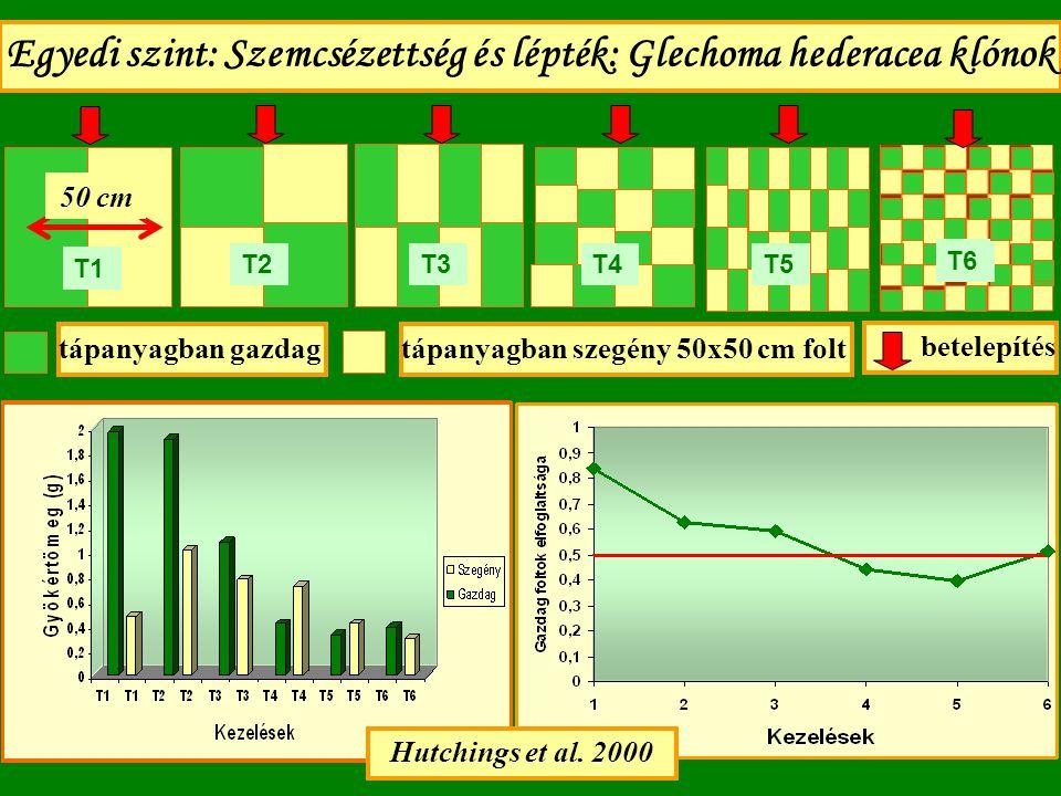 Egyedi szint: Szemcsézettség és lépték: Glechoma hederacea klónok tápanyagban gazdagtápanyagban szegény 50x50 cm folt T1 T2T3T4T5 Hutchings et al. 200