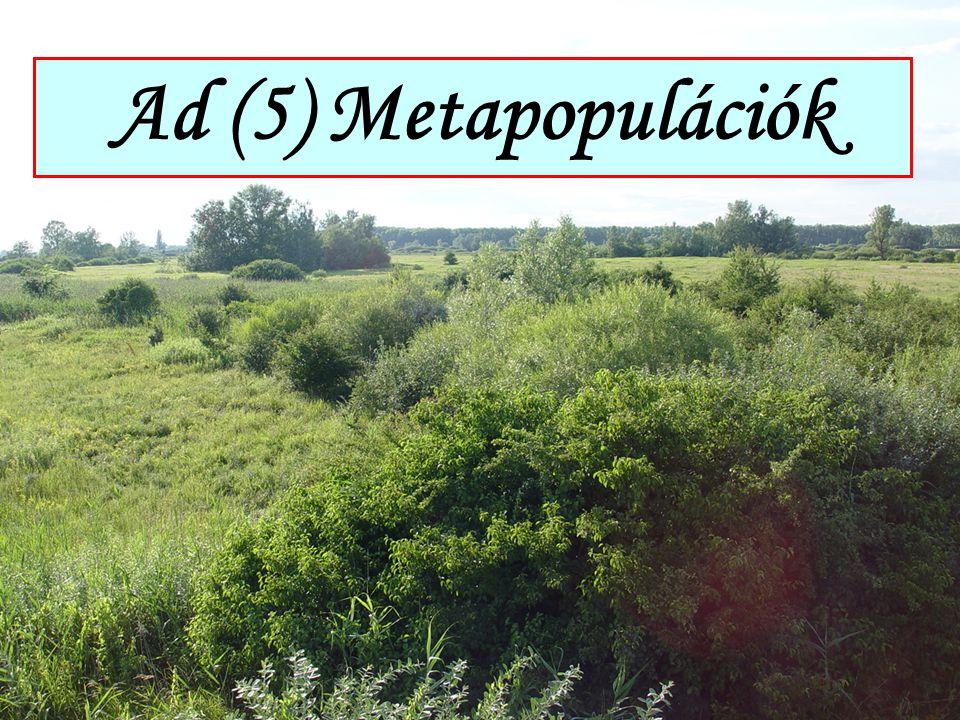 Ad (5) Metapopulációk