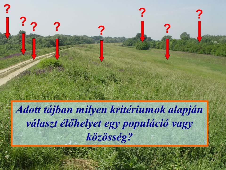 Adott élőhelyen egy közösség diverzitásának feltételei (Holt 1993): a habitat- szelekció következményei (1) Származási (táji) fajkészlet hatása (táji kényszerek) (2) Specifikus igények (aut- és szünökológiai kényszerek) (3) Forrás és nyelő habitatok (környezeti kényszerek) (4) Élőhely-szelekció heterogén kínálatú tájban (készlet-kényszerek) (5) Metapopulációk dinamikája (kolonizációs- kihalási kényszerek)