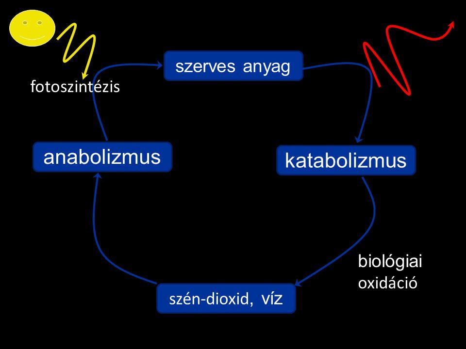 szén-dioxid, víz anabolizmus szerves anyag katabolizmus fotoszintézis biológiai oxidáció