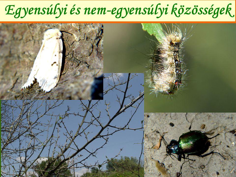 """Korai egyensúlyi elméletek (1) Goethe: """"A természet, hogy az egyik oldalon költekezhessék a másik oldalon takarékoskodni kényszerül Bonn (1843): a biológiai egyensúly fogalmának megalkotása Darwin (1859): a harcok újra-újra visszatérnek, változó sikerrel, hosszú távon az erők kiegyenlí- tődnek és a természet arculata egyforma marad."""