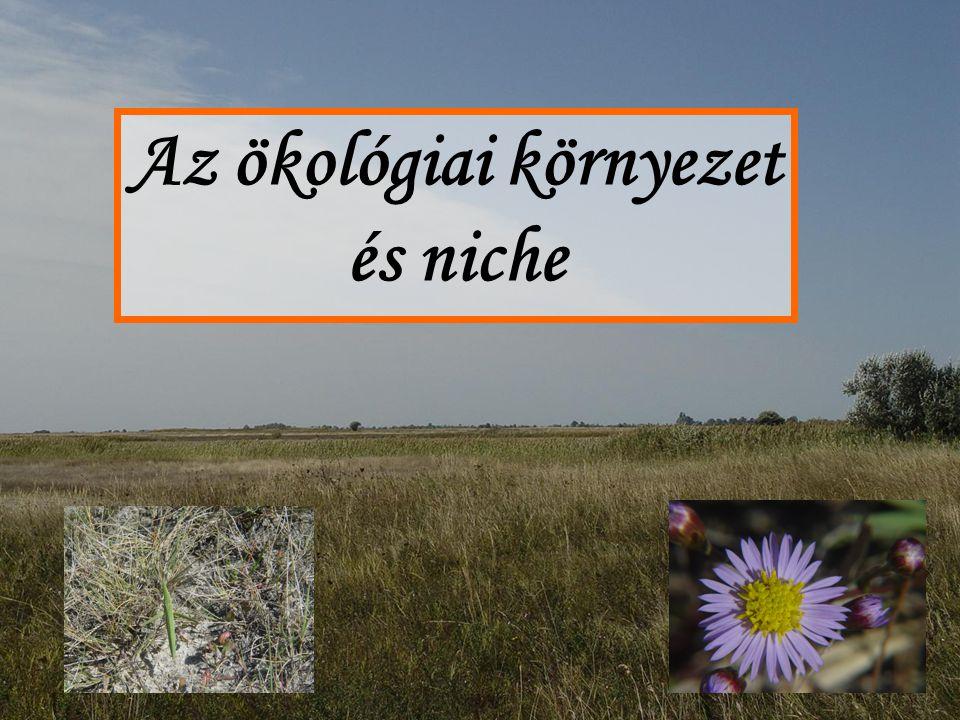 Az ökológiai környezet: (1) Szinguláris környezetelv A szinguláris környezetelv: a környezet az objektumot körülvevő külvilág.