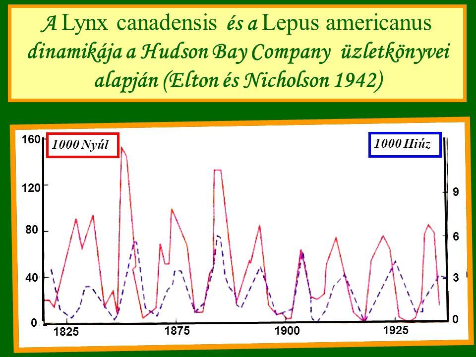 A Lynx canadensis és a Lepus americanus dinamikája a Hudson Bay Company üzletkönyvei alapján (Elton és Nicholson 1942) 160 120 80 40 0 1000 Nyúl 1000 Hiúz 3 6 9 1825 18751900 1925 0
