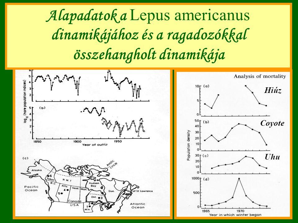 Alapadatok a Lepus americanus dinamikájához és a ragadozókkal összehangholt dinamikája Hiúz Coyote Uhu