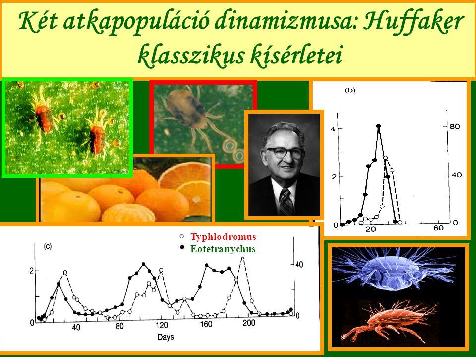 Két atkapopuláció dinamizmusa: Huffaker klasszikus kísérletei Typhlodromus Eotetranychus