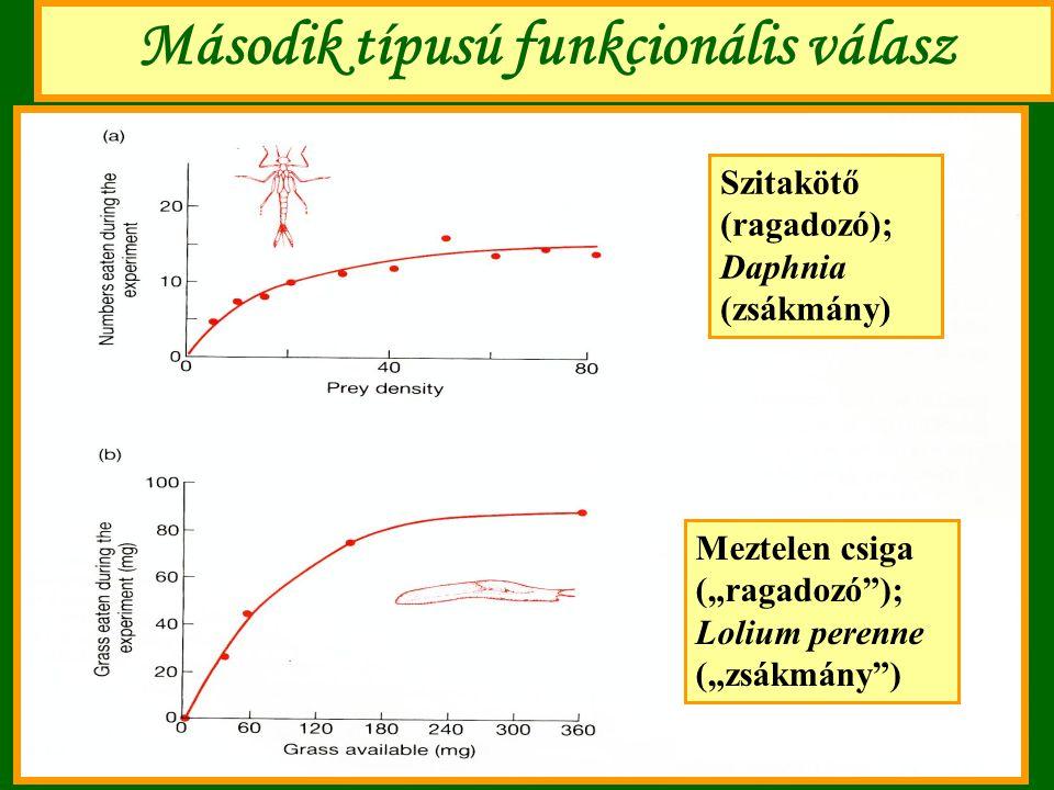 """Második típusú funkcionális válasz Szitakötő (ragadozó); Daphnia (zsákmány) Meztelen csiga (""""ragadozó""""); Lolium perenne (""""zsákmány"""")"""