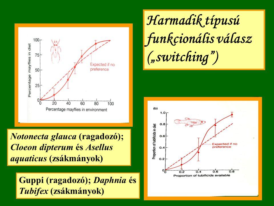 """Harmadik típusú funkcionális válasz (""""switching ) Notonecta glauca (ragadozó); Cloeon dipterum és Asellus aquaticus (zsákmányok) Guppi (ragadozó); Daphnia és Tubifex (zsákmányok)"""