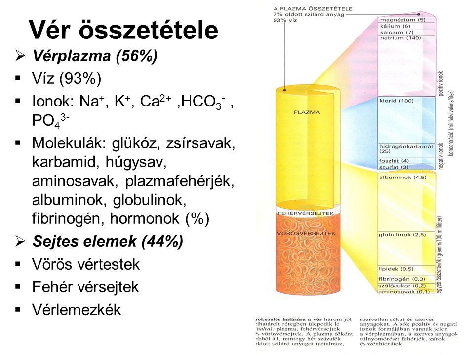 Vér összetétele  Vérplazma (56%)  Víz (93%)  Ionok: Na +, K +, Ca 2+,HCO 3 -, PO 4 3-  Molekulák: glükóz, zsírsavak, karbamid, húgysav, aminosavak