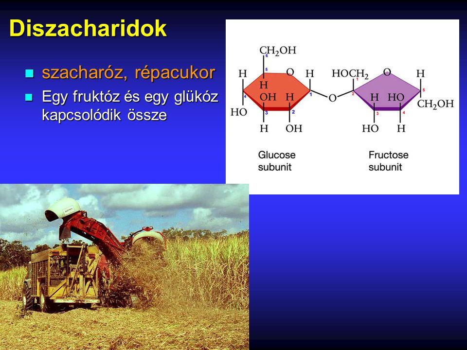 Diszacharidok n szacharóz, répacukor n Egy fruktóz és egy glükóz kapcsolódik össze