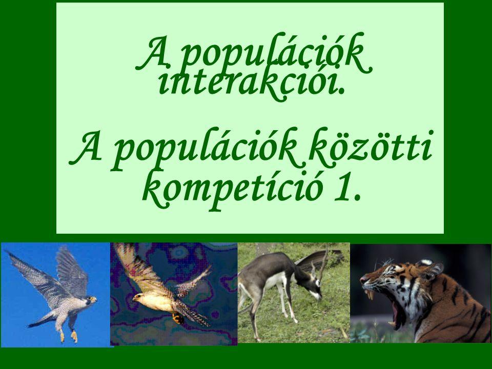 A populációk interakciói. A populációk közötti kompetíció 1.